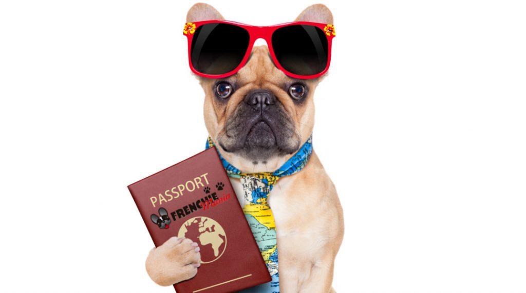 Tienes una mascota y deseas viajar, estos son los mejores consejos para hacerlo